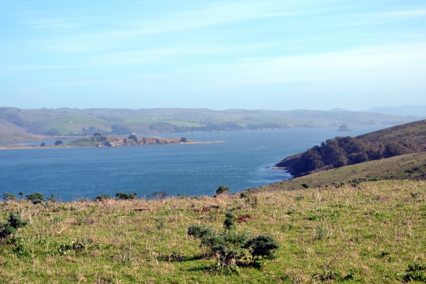 Tomales_Bay_as_viewed_from_Tomales_Point_Trail_4