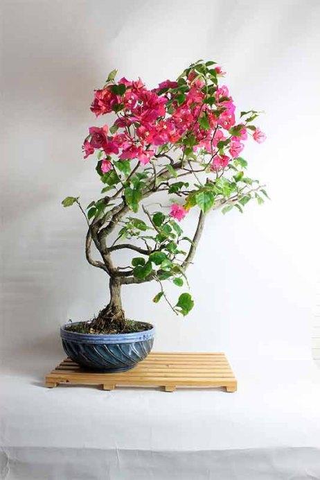 bloombonsai