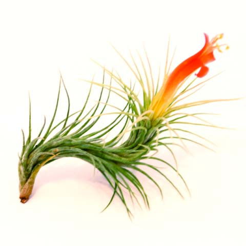 flower airplant