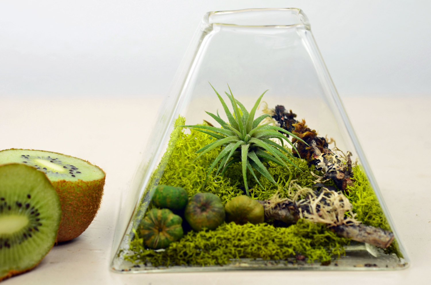 how to download from terrarium
